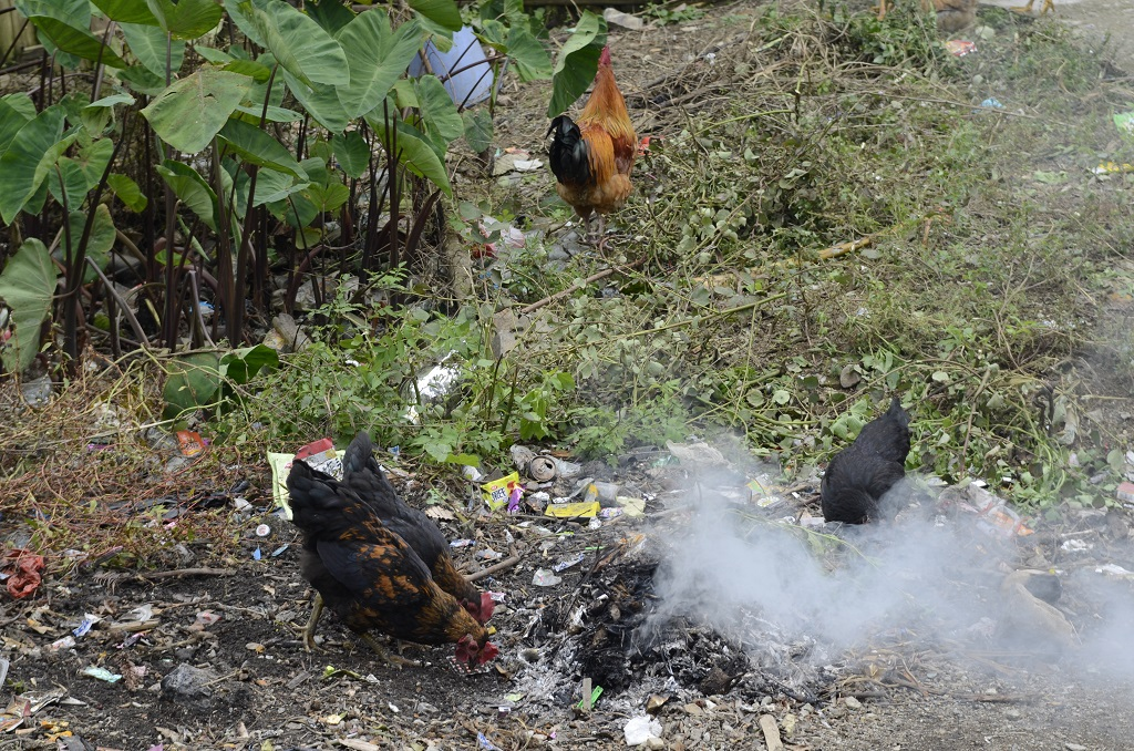 Waste burning
